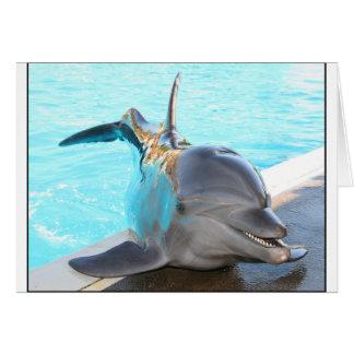Pegue una actitud (la foto del delfín) tarjeta de felicitación