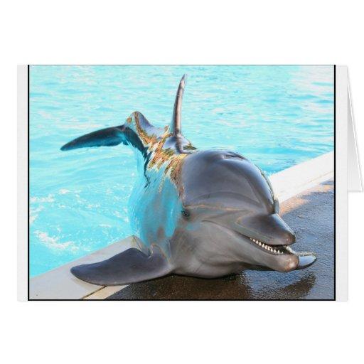 Pegue una actitud (la foto del delfín) felicitación