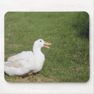 Pekin duck with open bill on green grass mousepads
