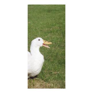 Pekin duck with open bill on green grass rack card