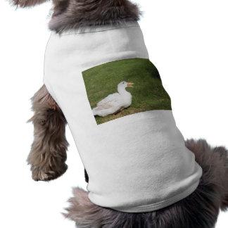 Pekin duck with open bill on green grass shirt
