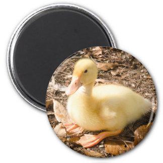 Pekin Duckling Refrigerator Magnet