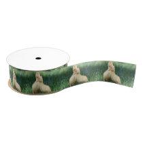 Pekin Ducklings Grosgrain Ribbon