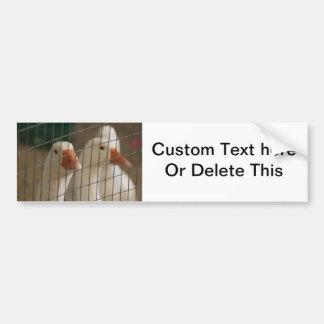 Pekin ducks in cage picture bumper sticker