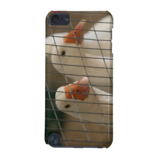 Pekin ducks in cage picture iPod touch (5th generation) case