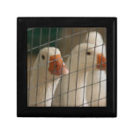 Pekin ducks in cage picture keepsake box
