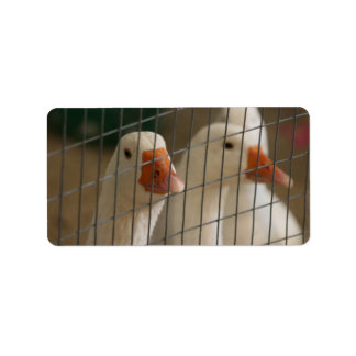 Pekin ducks in cage picture label