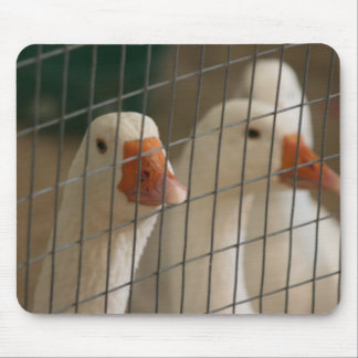 Pekin ducks in cage picture mouse pads