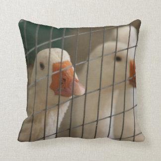 Pekin ducks in cage picture pillow