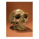 Peking Man's reconstructed skull Postcard