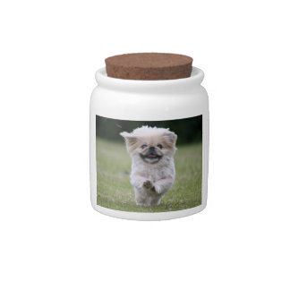 Pekingese dog candy jar, cute photo cookie jar candy dishes