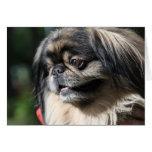 Pekingese dog card
