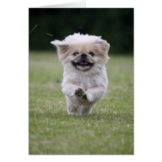 Pekingese dog card, cute photo blank note card