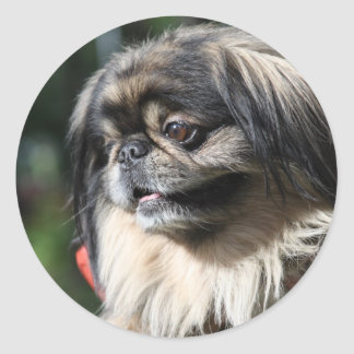Pekingese dog classic round sticker