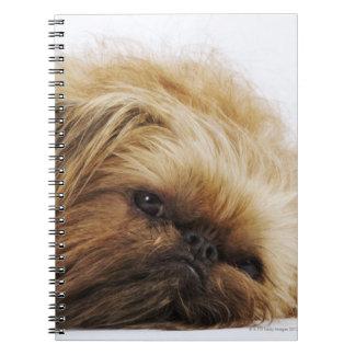 Pekingese dog, close up spiral notebook