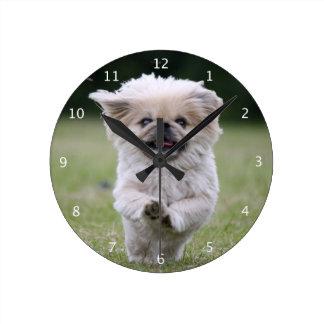 Pekingese dog cute beautiful photo, happy running round clock