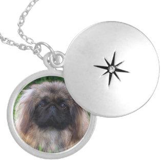 Pekingese dog cute photo locket