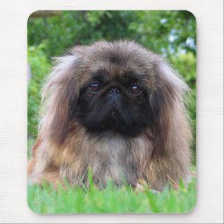 Pekingese dog cute photo mousepad