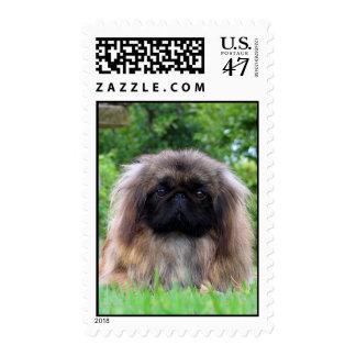 Pekingese dog cute photo postage