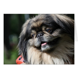 Pekingese  dog greeting card