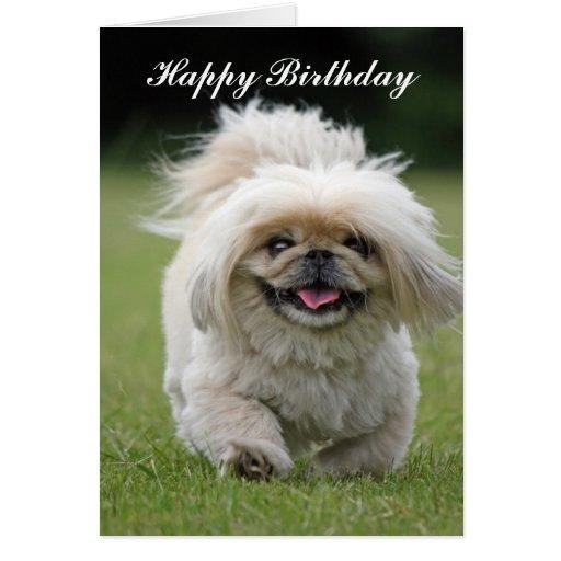 Pekingese dog happy birthday  greeting card
