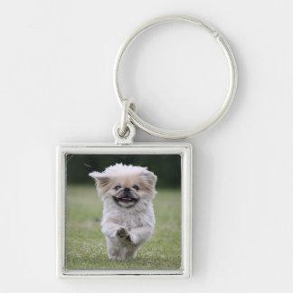 Pekingese dog keychain, cute photo, gift keychain