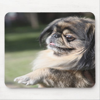 Pekingese Dog Mousepad