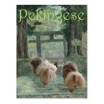 Pekingese Dog Oriental Gate Postcard