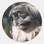 Pekingese dog round sticker