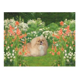 Pekingese en el jardín postal