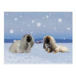Pekingese en invierno postales