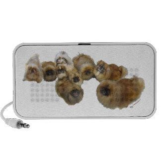 Pekingese Group Travel Speaker