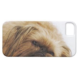 Pekingese Hund, nahes hohes iPhone SE/5/5s Case