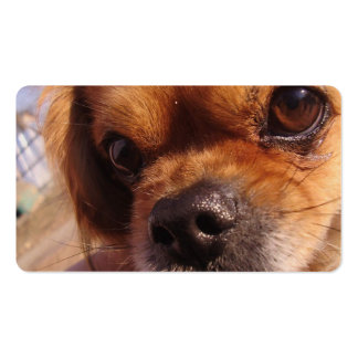 pekingese.png Double-Sided standard business cards (Pack of 100)