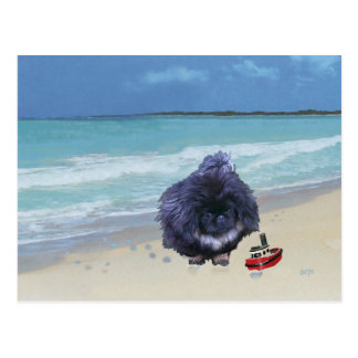Pekingese Puppy at the Beach Post Cards