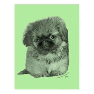 Pekingese Puppy Green Postcard