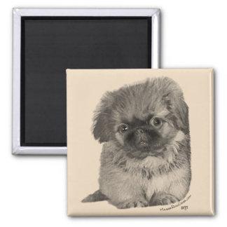 Pekingese Puppy Magnet