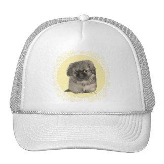Pekingese Puppy Yellow Hats