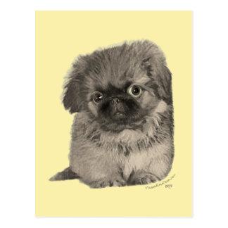 Pekingese Puppy Yellow Postcard