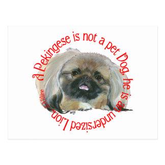 Pekingese Wisdom - Undersized Lion ! Postcard