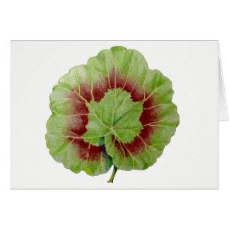 Pelargonium 'Geranium Leaf' Greeting Card