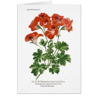 Pelargonium grandiflorum card