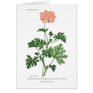 Pelargonium graveolens card
