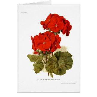 "Pelargonium 'His Majesty"" Card"