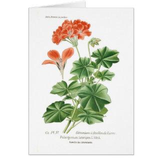 Pelargonium lateripes card
