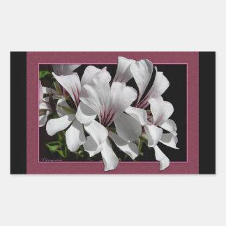 Pelargonium Pegatina Rectangular