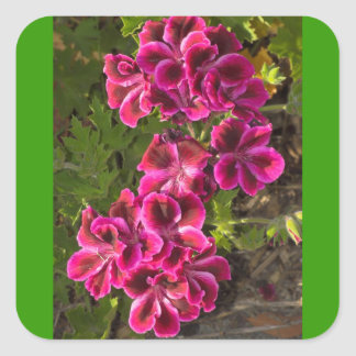 Pelargonium Square Sticker