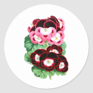 Pelargoniums Classic Round Sticker