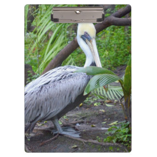 pelcian behind plant bird copyright.jpg clipboard