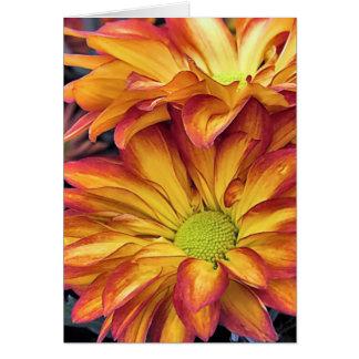Pelee Chrysanthemums Card